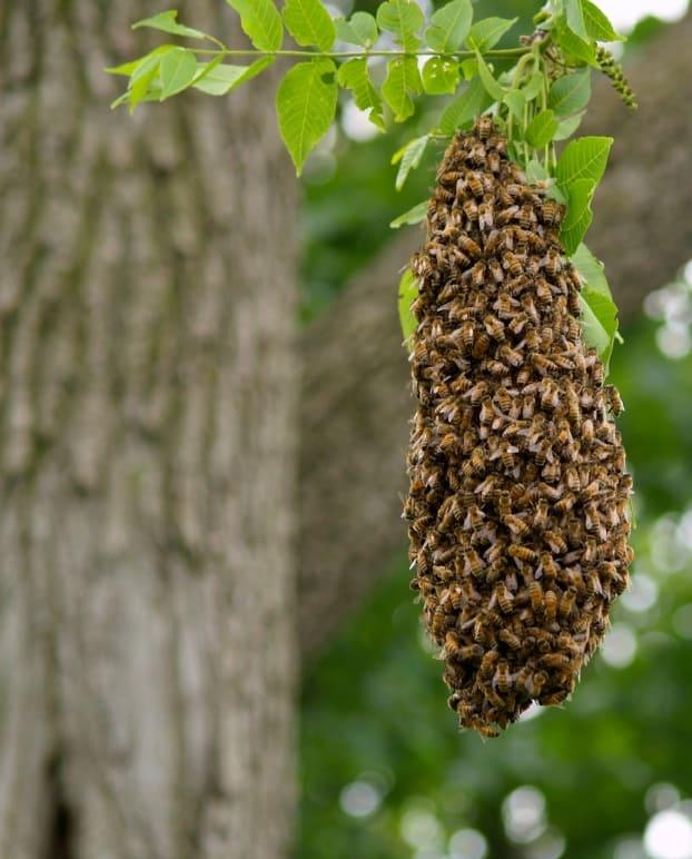 Outdoor bee's nest
