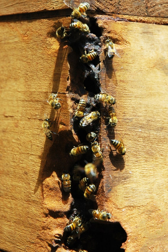 Bee's in the roof