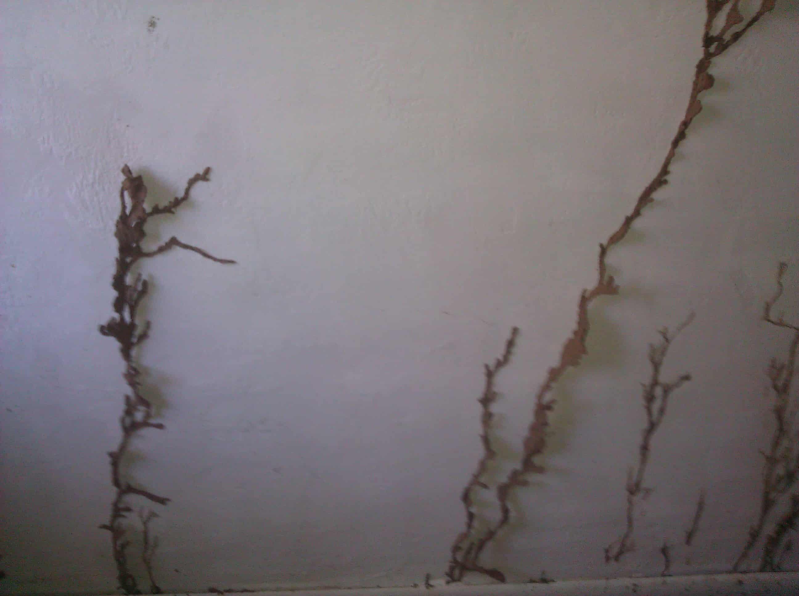 Termite tubes