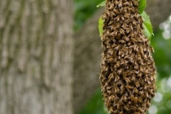 Outdoor bee's nest