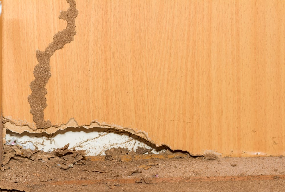 Images Of Budget Brothers Termite Reviews