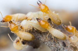 Types of termiticides - Altriset