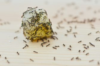 Need to get rid of ants?