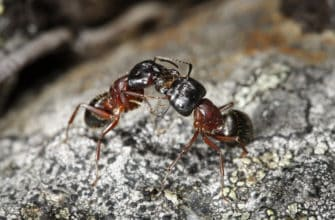Keep Carpenter Ants Out of Your Home