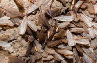 When to get termite treatment