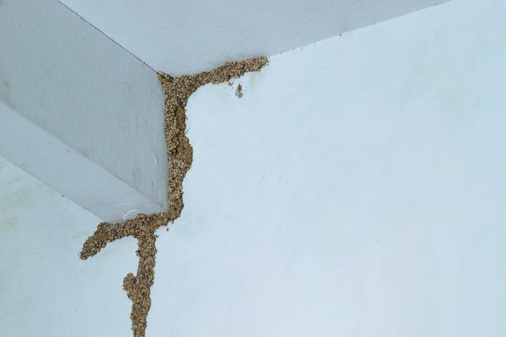 Subterranean Termites And Termite Tubes Budget Brothers