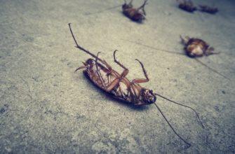 Cockroach control in Phoenix, AZ