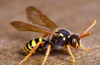 What you need to know about wasps