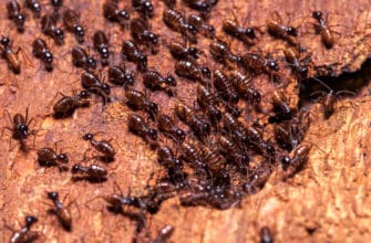 What is the best termite treatment?