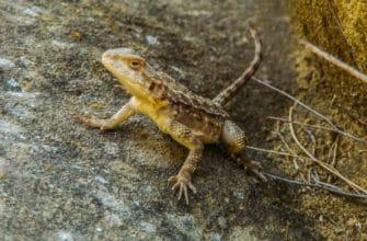 What are the predators of termites?