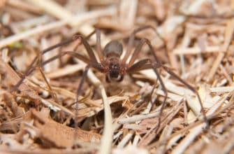 Ten common Arizona spiders and arachnids