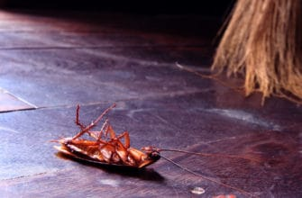 Fascinating facts about roaches