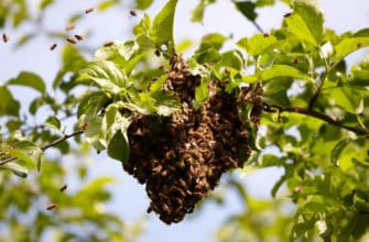 DIY bee removal: worth the risk?