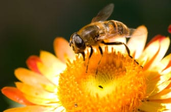 Types of bees in Arizona and how to avoid them