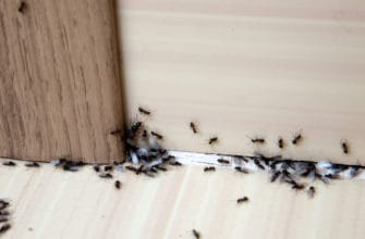 7 steps to getting rid of ants inside your house