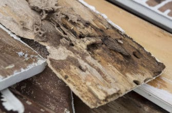 5 scary facts about termite damage