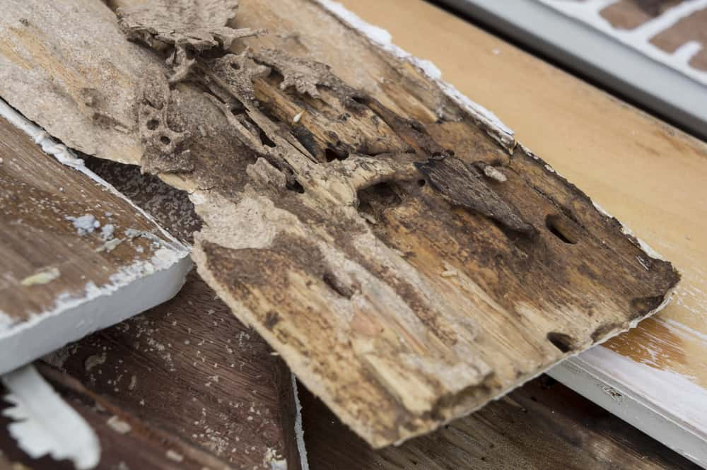 5 Scary Facts About Termite Damage Budget Brothers Termite