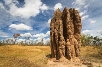 7 amazing facts about termites