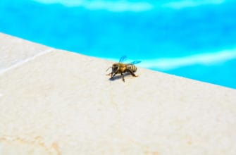 How to get rid of bees and wasps around a pool