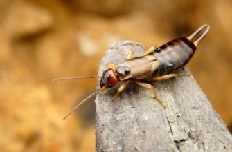 How the Phoenix Weather Affects Pests in Your Home