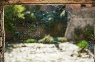 Brown Spiders of Arizona