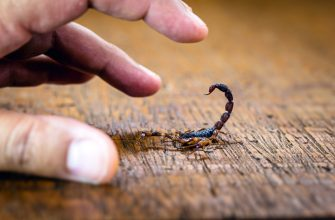 7 Scorpion Myths